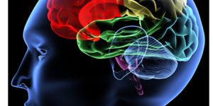 İnsan beyni anlamlı olanı sever