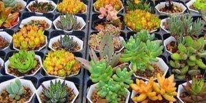 İşte dünyadaki bitki türü sayısı